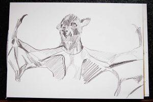 Fledermaus, Bleistift, 20 x30 cm, 2015
