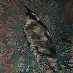 Singvogel, Öl auf Leinwand, 90 x 70 cm, 2015