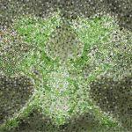 Sakura, Filzstift, Pigment, Bleistift, 100 x 120 cm, 2010